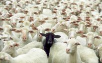 black-sheep-of-the-family+(1)